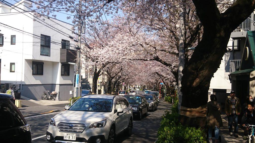 かむろ坂の桜(昼)
