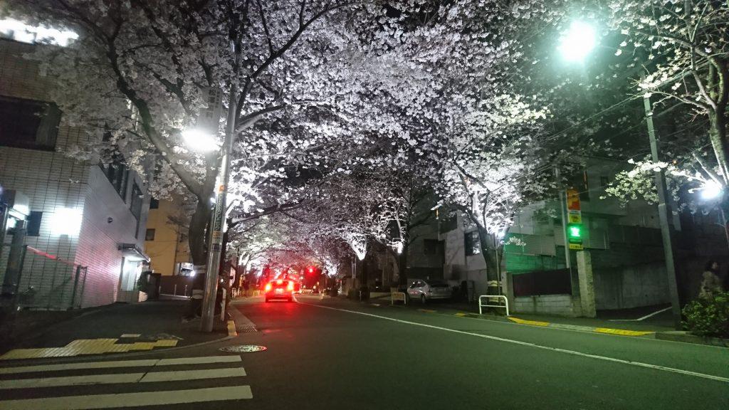 かむろ坂の桜ライトアップ3