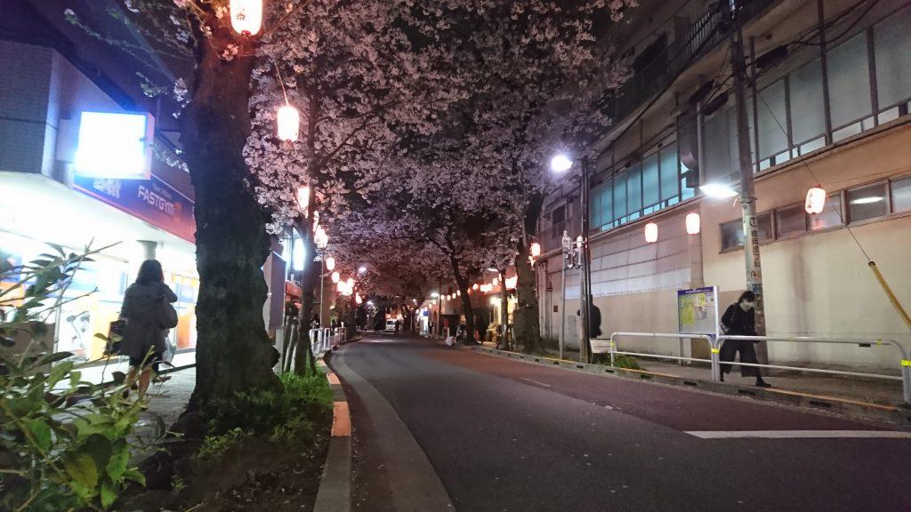 立会道路の夜桜