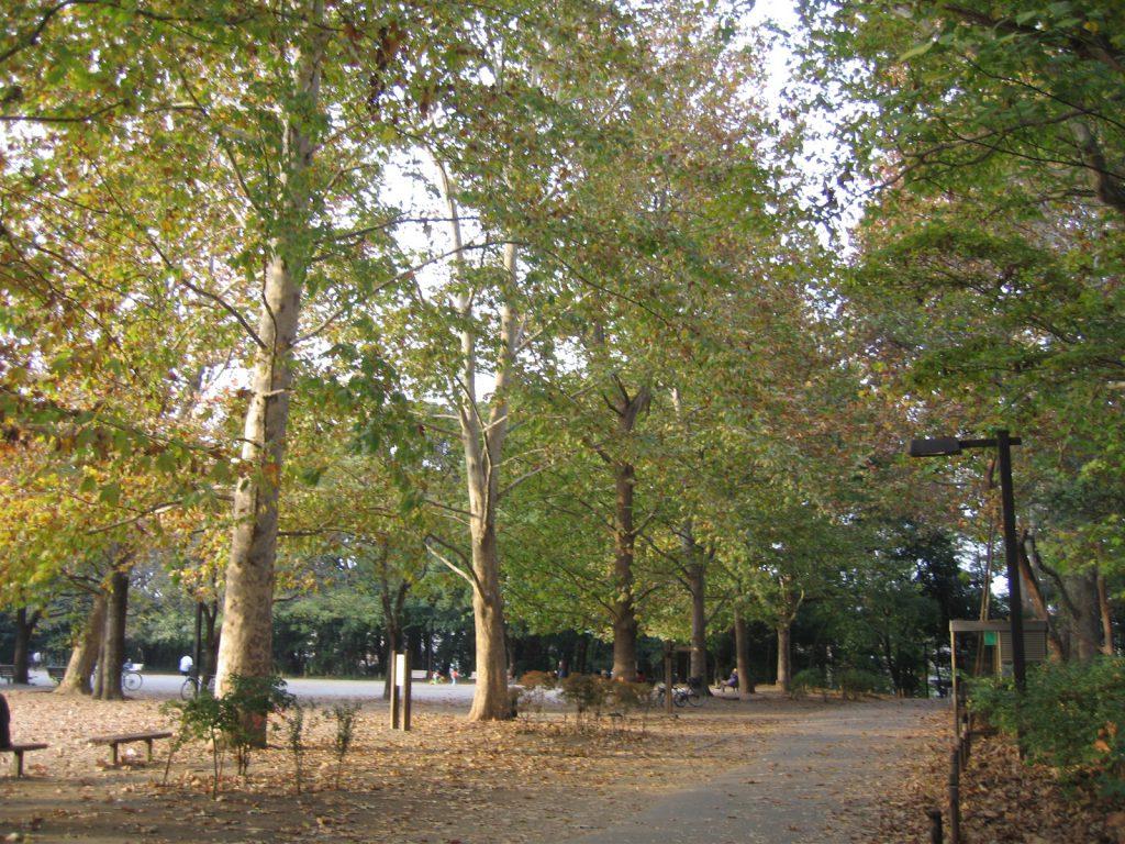 秋の林試の森公園