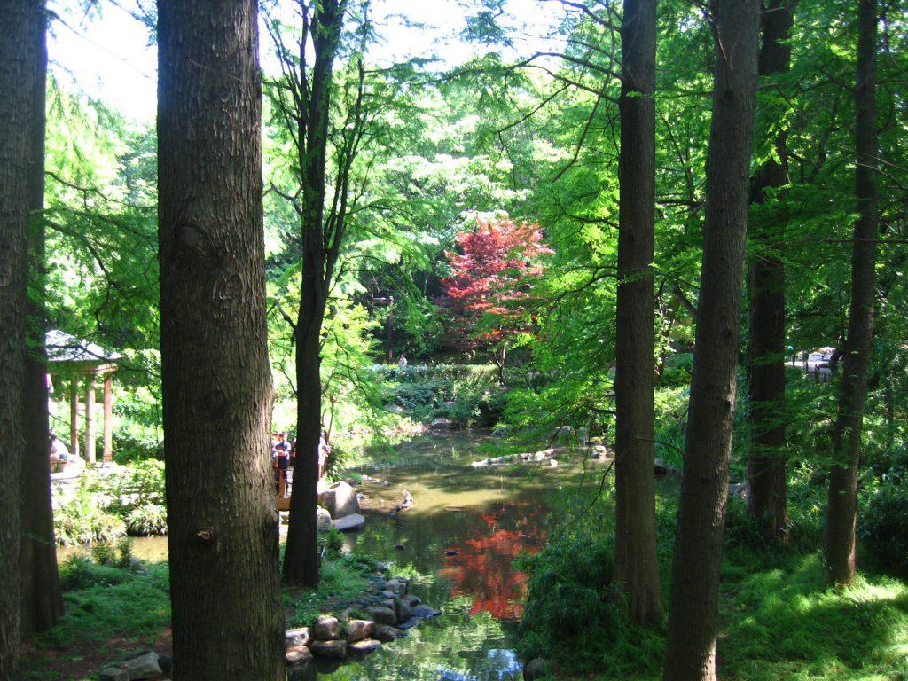 新緑の林試の森公園